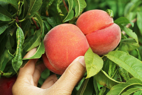PeachesHome